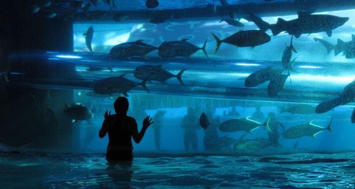 Akvárium. Ilustrační foto