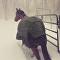 Majitel pustil koně běhat během sněžení, jejich reakce rozesmála internet