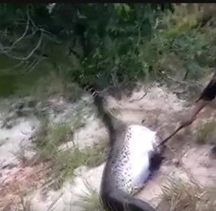 Rybáři nalezli obří anakondu