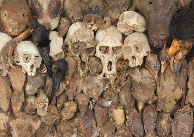 Bizarní Tržnice Akodessewa pro vyznavače voodoo