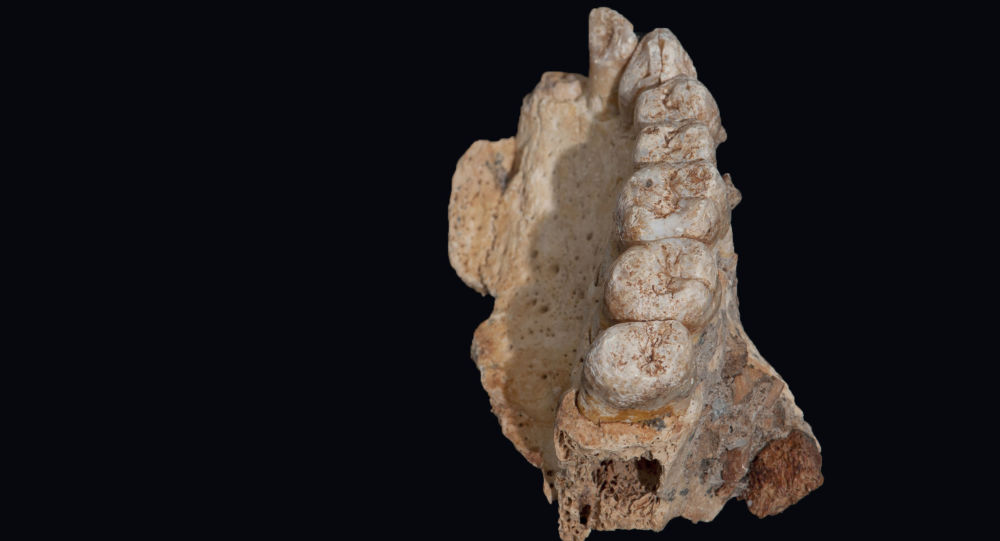 Čelist nalezená v Izraeli