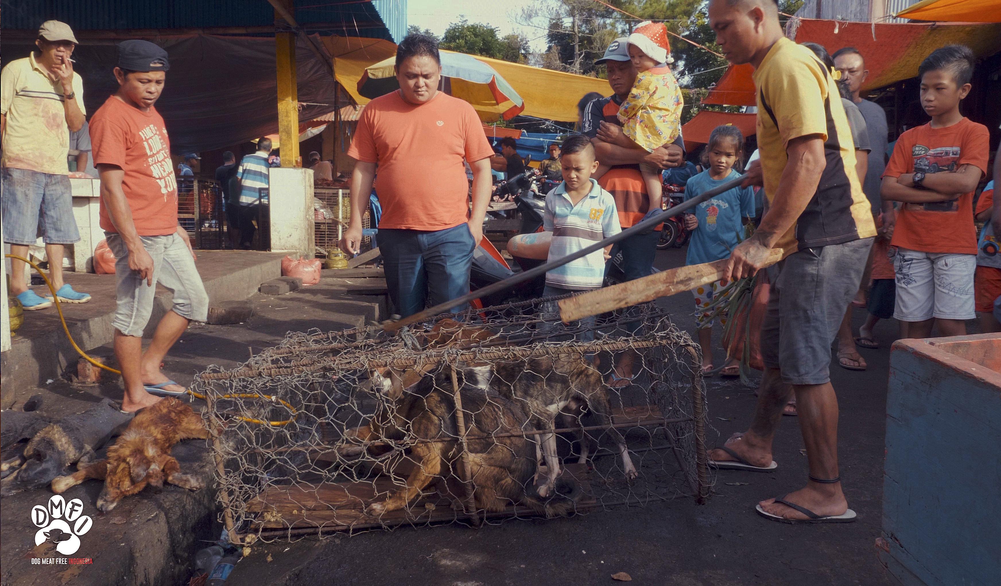 Psy a kočky vystavují na indonéských masných trzích