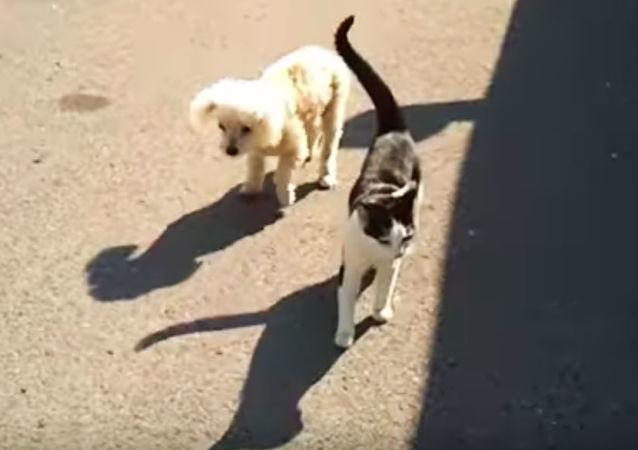 Kočka pomáhá slepému štěněti