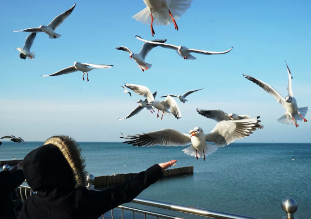 Ráčci na břehu Baltského moře
