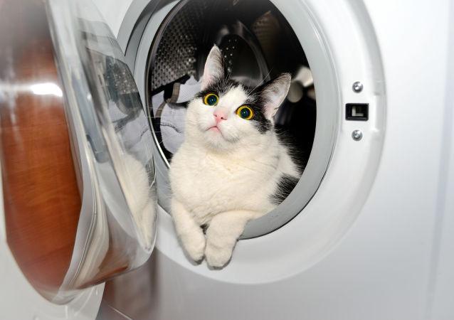 Kocour v pračce
