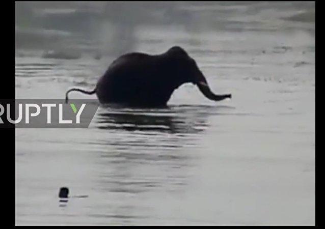 V Indii byl natočen útok slona na muže