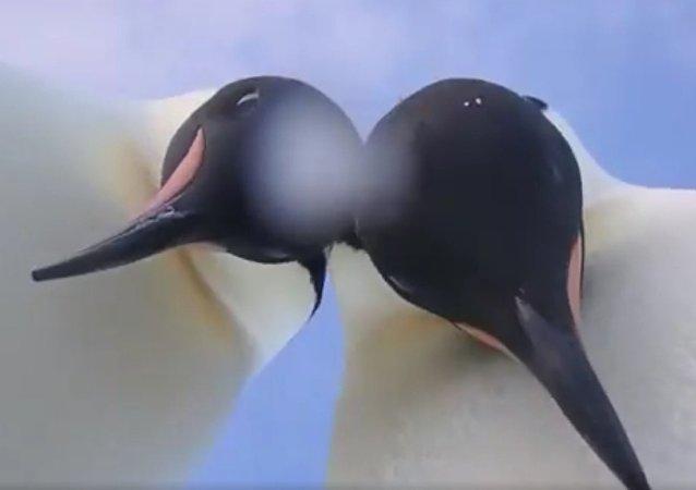 Dva tlustí tučňáci provedli selfie workshop