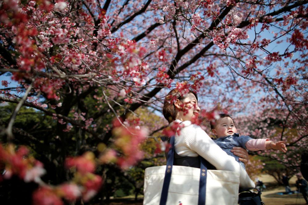 Matka s dítětem se dívají na předčasně kvetoucí sakuru v Národním parku Shinjuku Gyoen v Tokiu, 14. března 2018