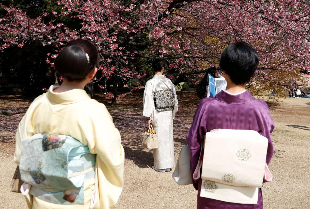 Ženy v kimonech se dívají na kvetoucí sakuru v Národním parku Shinjuku Gyoen v Tokiu, 14. března 2018