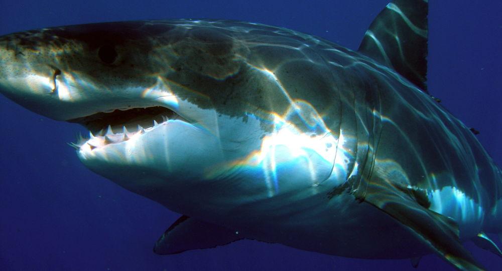 Video: Dron pomohl k záchraně plavce před bílým žralokem