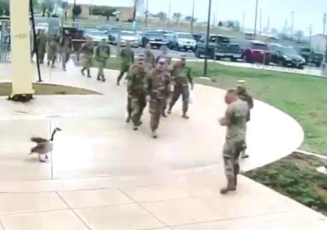 Agresivní husa vylekala americké vojáky