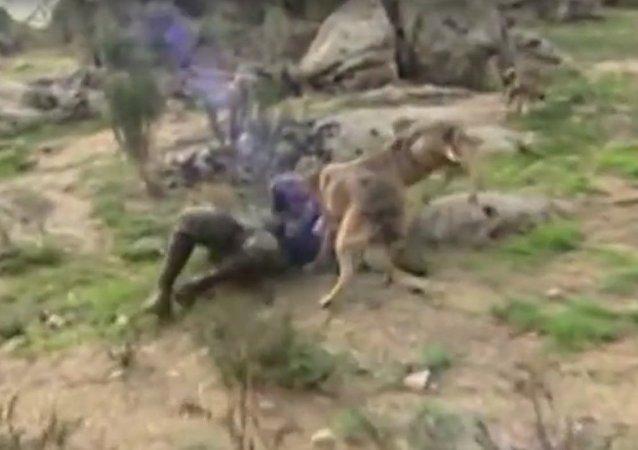 Španělský Mauglí se chce vrátit k vlkům, protože je zklamán lidmi (VIDEO)