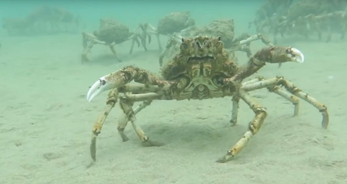 Láskyplný krab objal videokameru