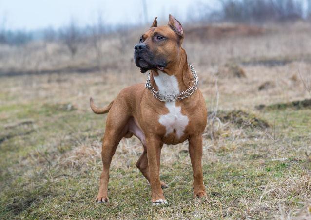 Stovky rodin jsou ochotné si vzít psa, který zakousl invalidní majitelku a jejího syna