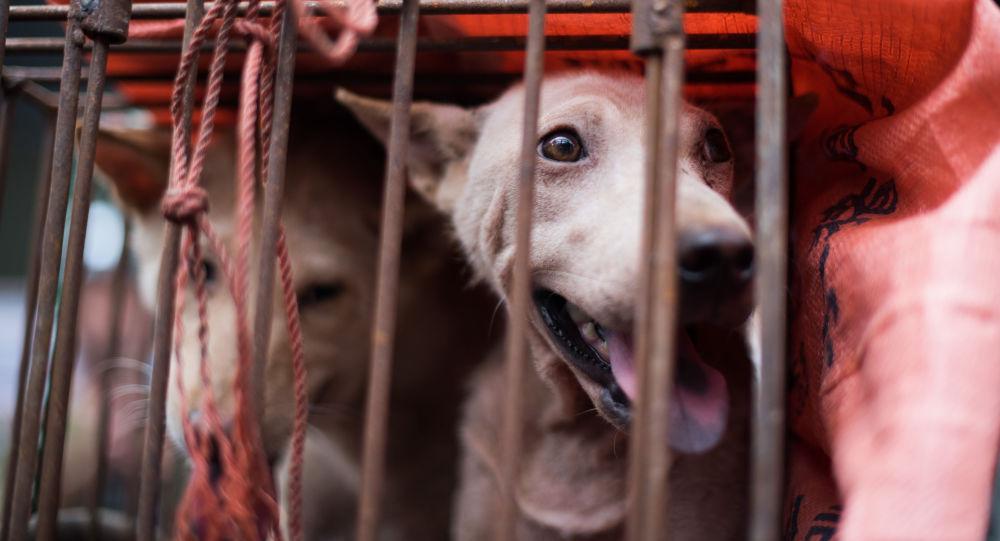 Psi v kleci