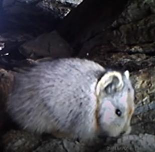 """V Číně natočili na video unikátního """"kouzelného králíka"""""""
