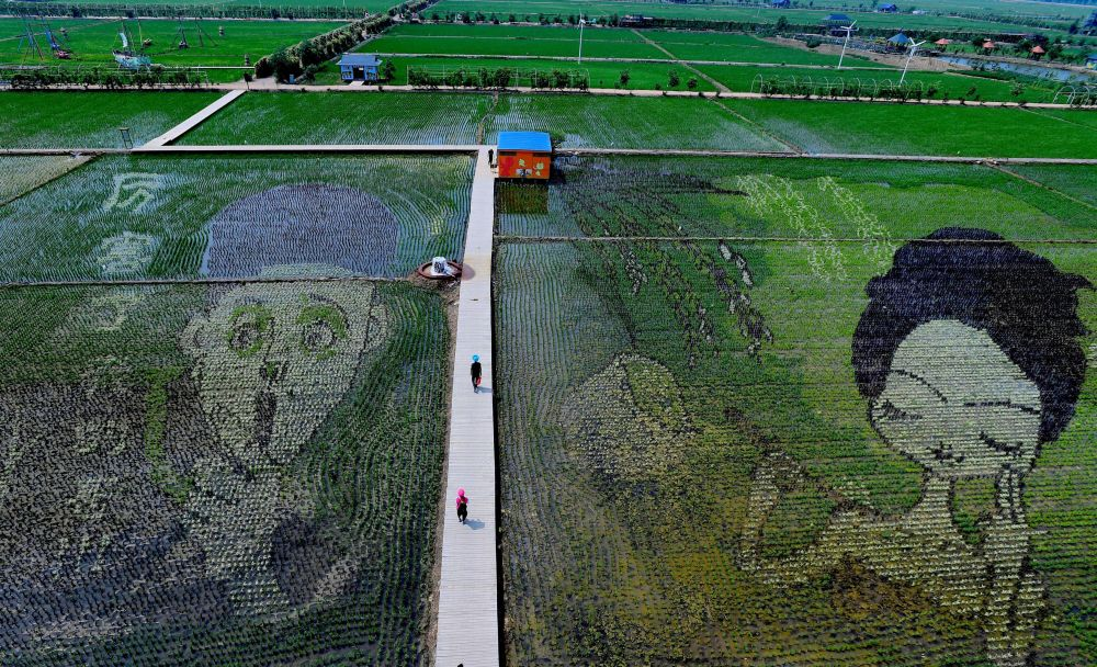 Ilustrace vytvořené na rýžových polích v Číně
