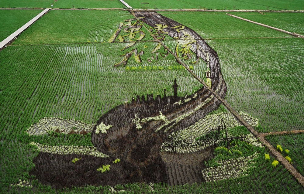 Nápis Úžasná Čína na rýžovém poli v Číně