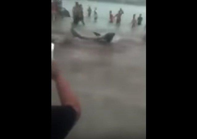 Očití svědci natočili neúspěšný pokus žraloka o útok na turisty