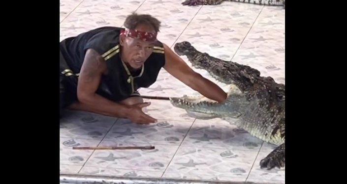 Útok krokodýla na krotitele v Thajsku