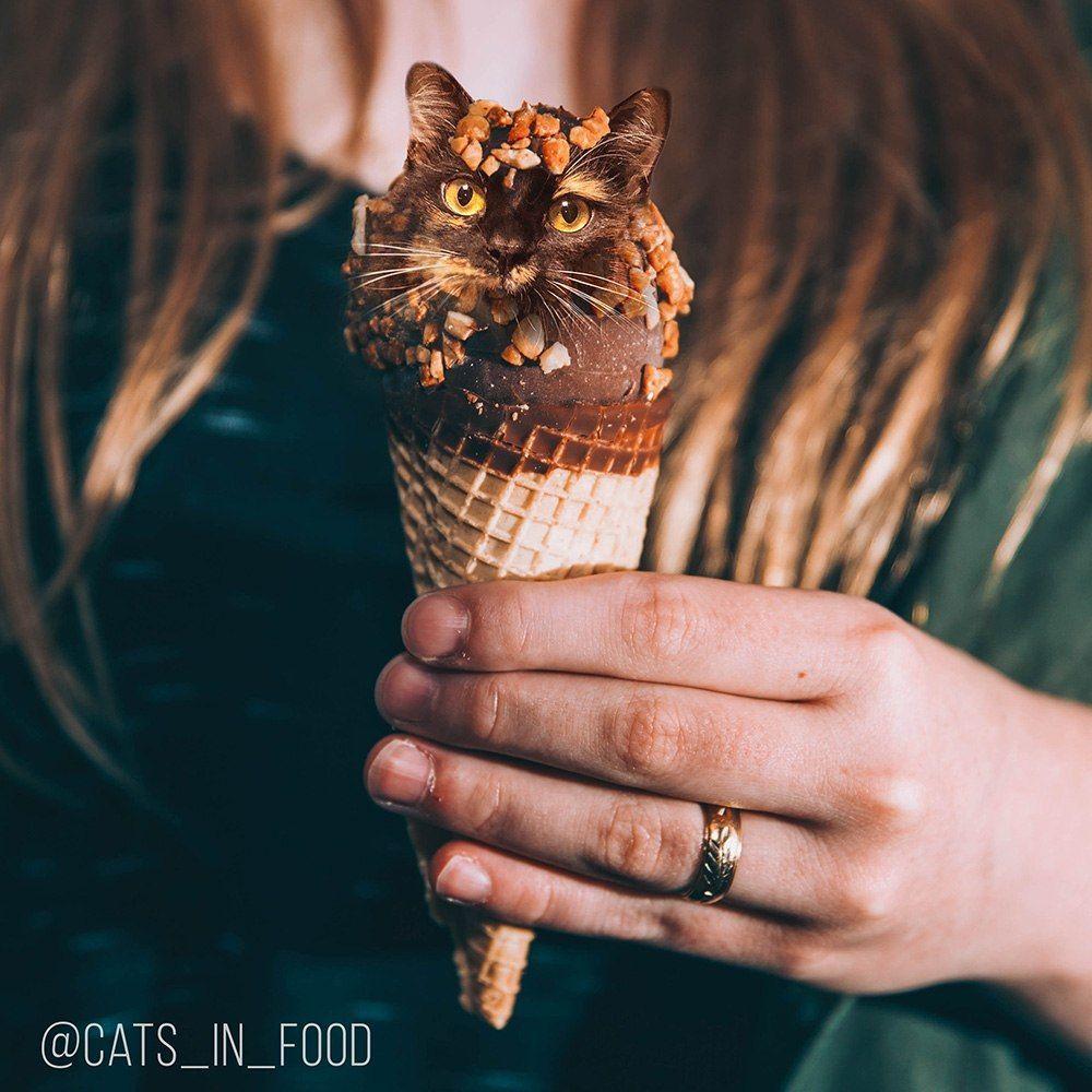 Nejchutnější a nejlákavější kocouři a kočky