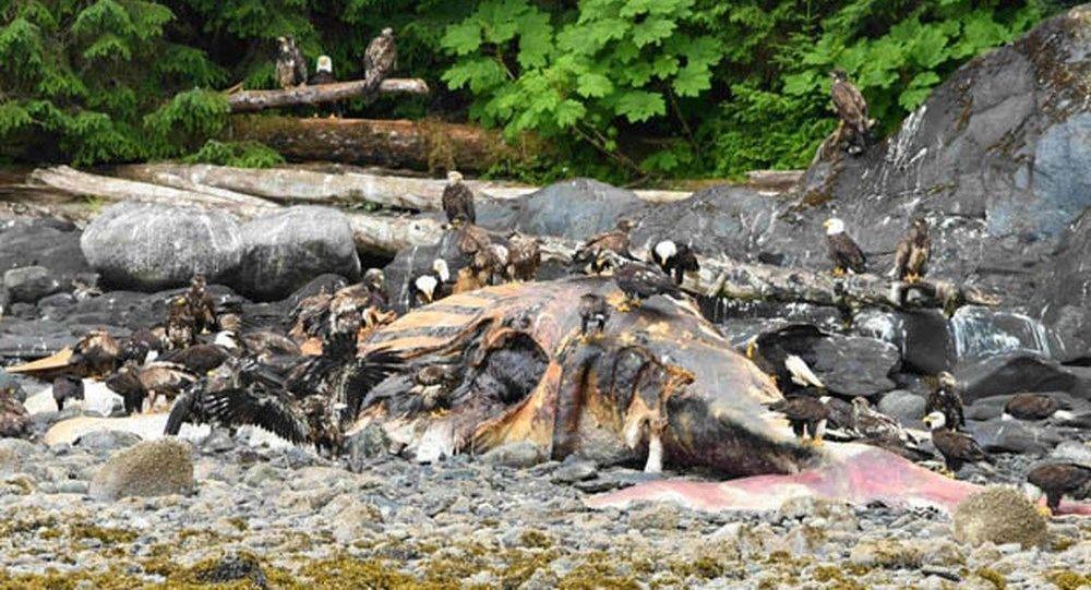 Rybáři našli na břehu Aljašky obrovský netvor s podivnými očima