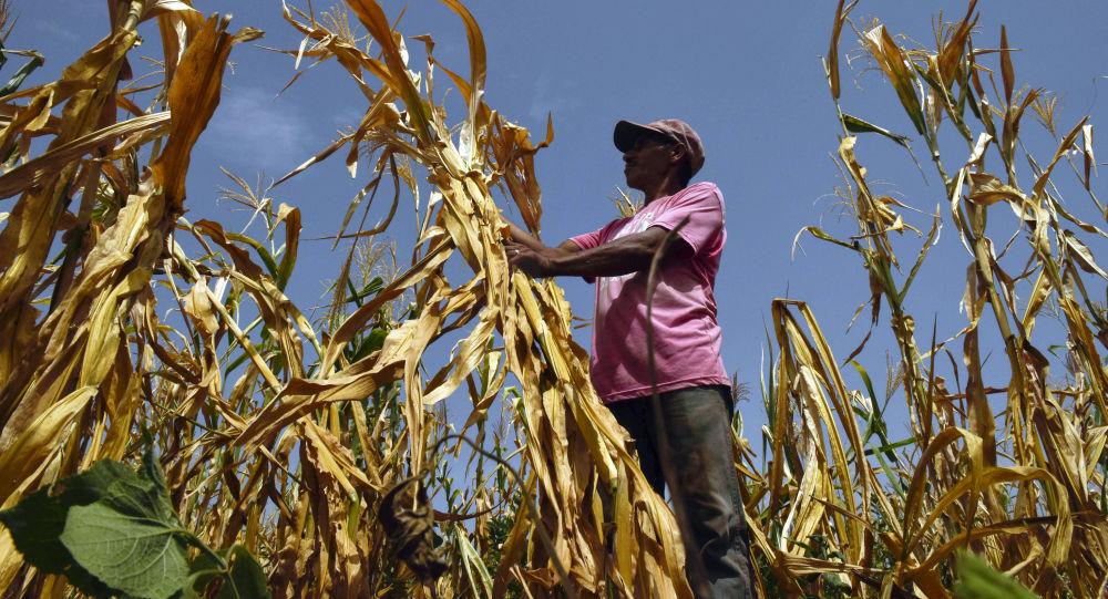 Farmář, který přišel o úrodu kvůli suchu