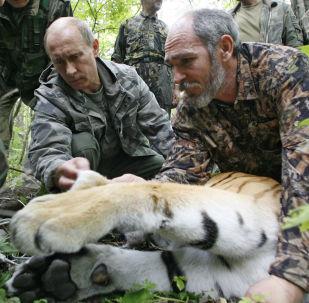 Vladimir Putin v Ussurijské rezervaci na Sibiři