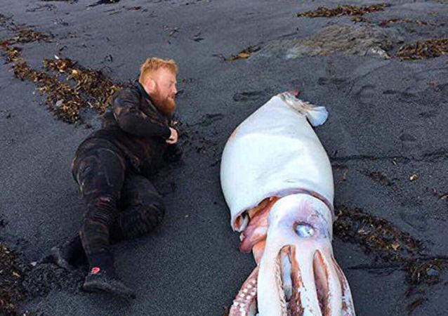 Krakatice nalezená nedaleko Wellingtonu