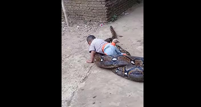 Rodiče natočili, jak si dítě hraje s obrovskou krajtou (VIDEO)