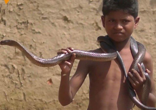 Dokázali byste pohladit jedovatého hada? Tento chlapec se s nimi koupe!
