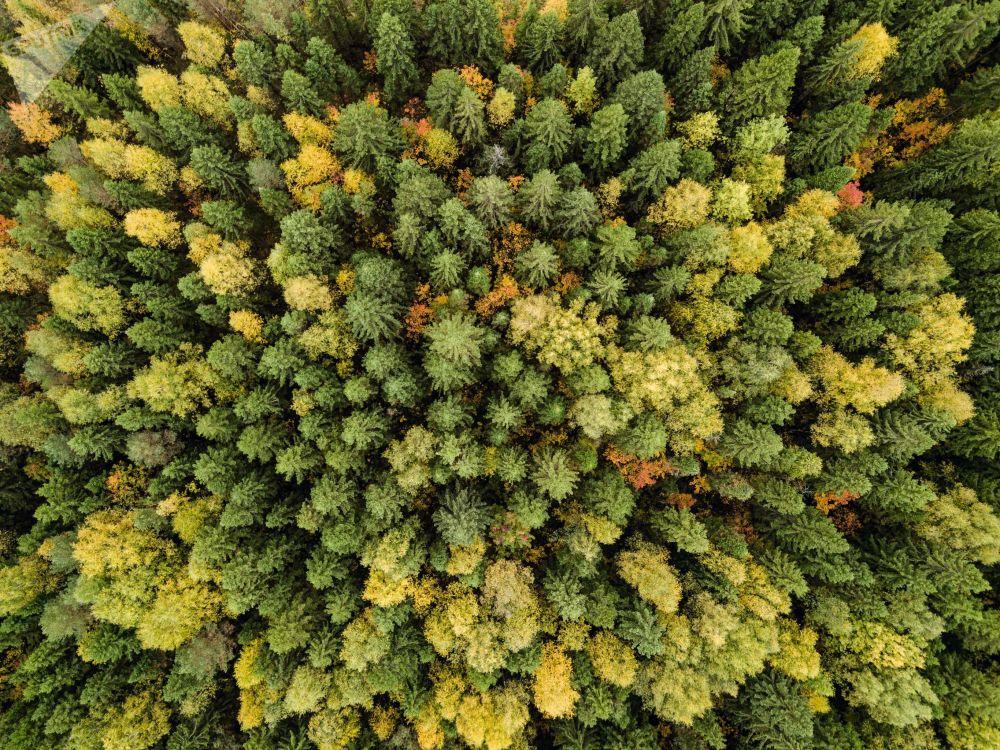 Podzim v Rusku: Krátké, ale nádherné období