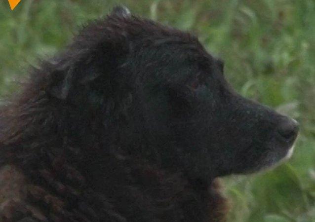 Tento pes dva roky čekal na páníčka, který zemřel při dopravní nehodě