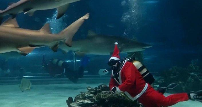 Santa Claus se žraloky