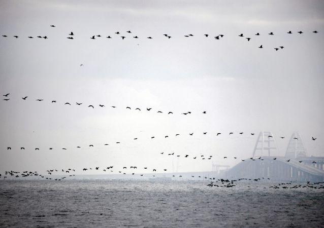 Ptáci nad Kerčským průlivem