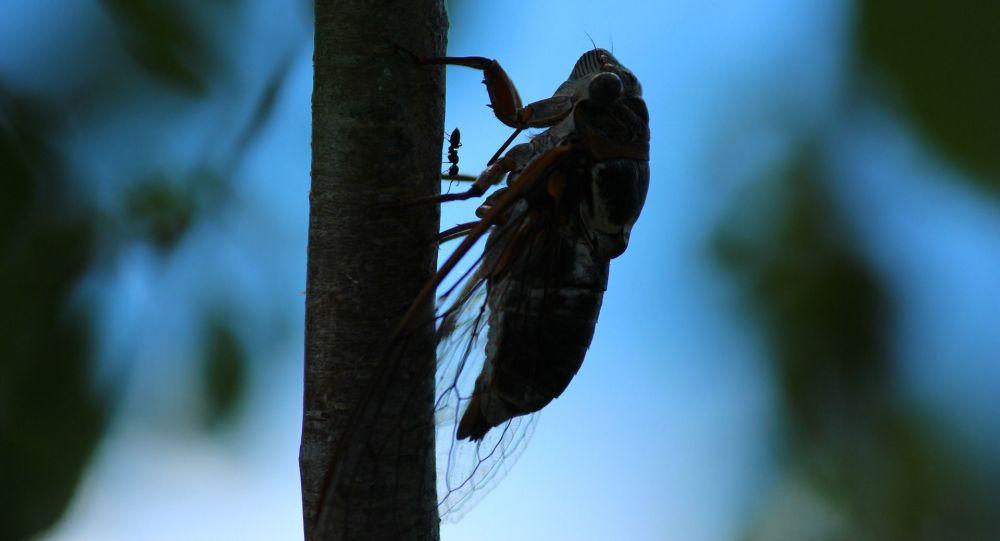 Cvrček. Ilustrační foto