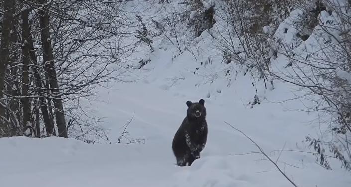 Setkání polského lesníka s medvědem