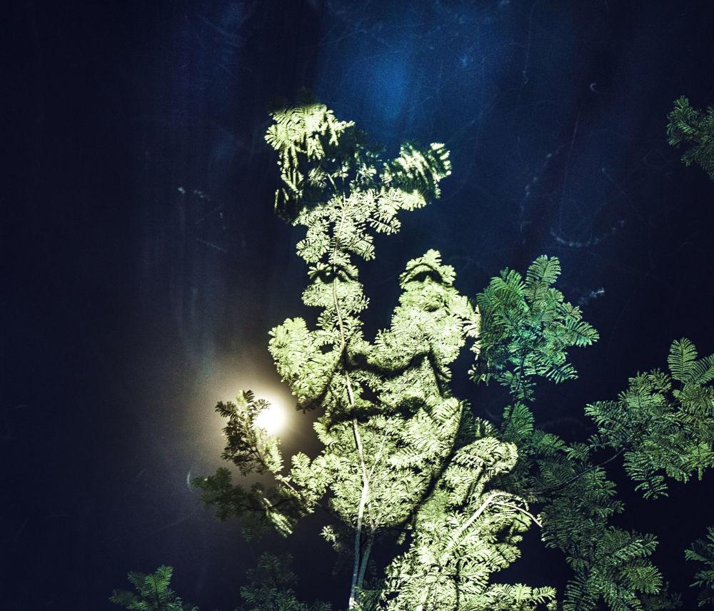 Tváře stromů