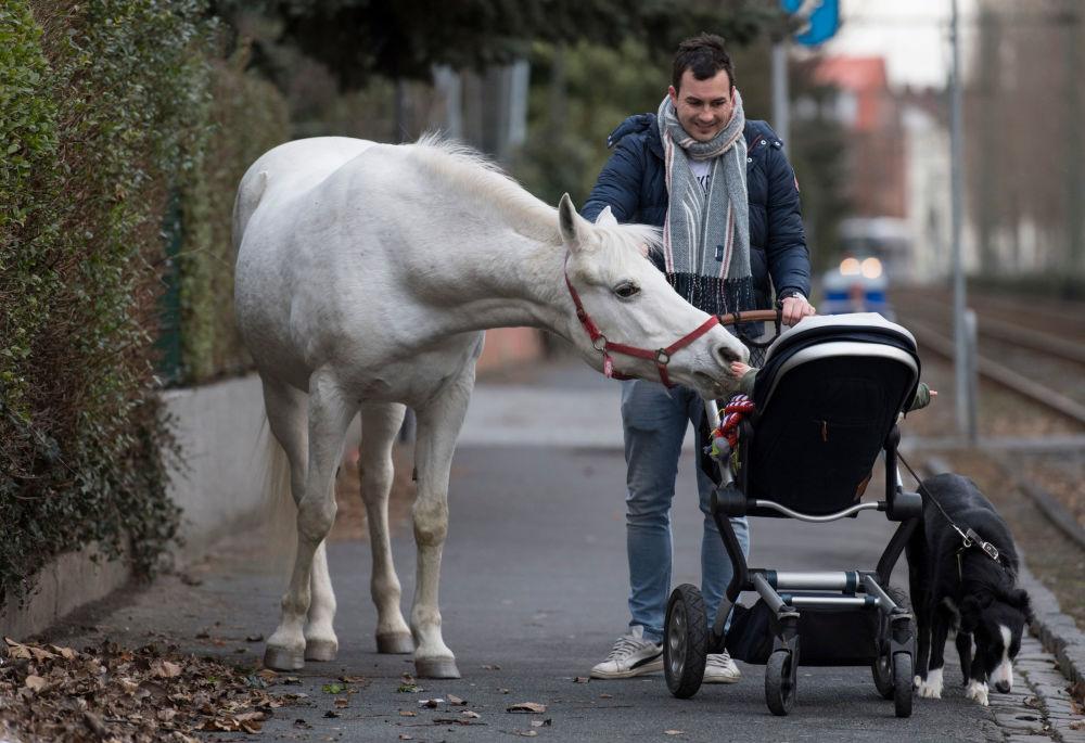 Kůň jménem Jenny si se zájmem prohlíží dítě na invalidním vozíku, Frankfurt nad Mohanem, Německo.