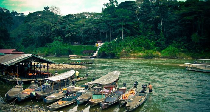 Džungle v Malajsii
