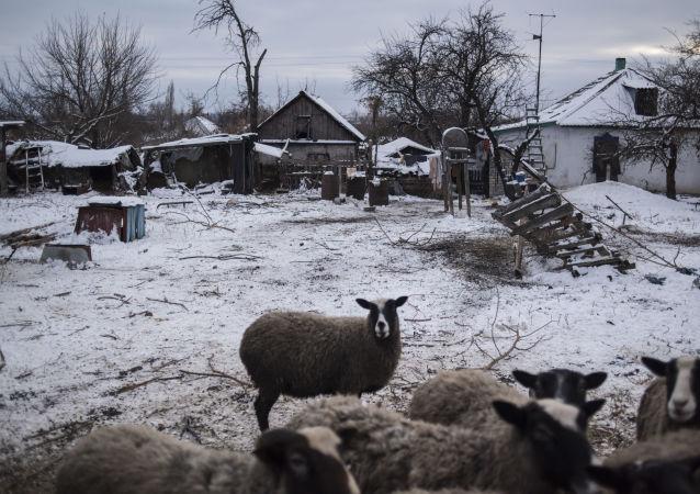 Ovce ve vesnici Doněckij v Luhanské oblasti
